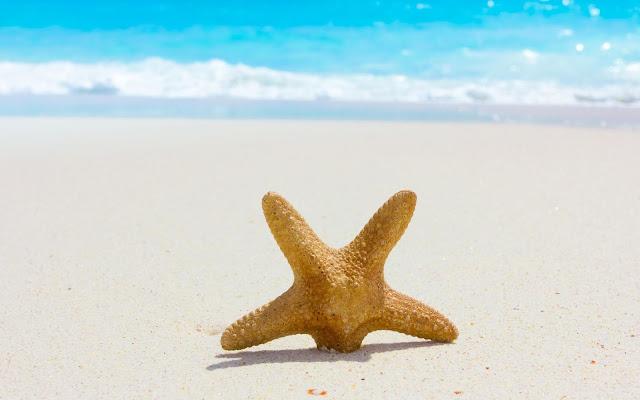 Estrella de Mar en la Orilla de la Playa - Imágenes de Verano Playyero