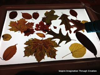 nature table contents on light box