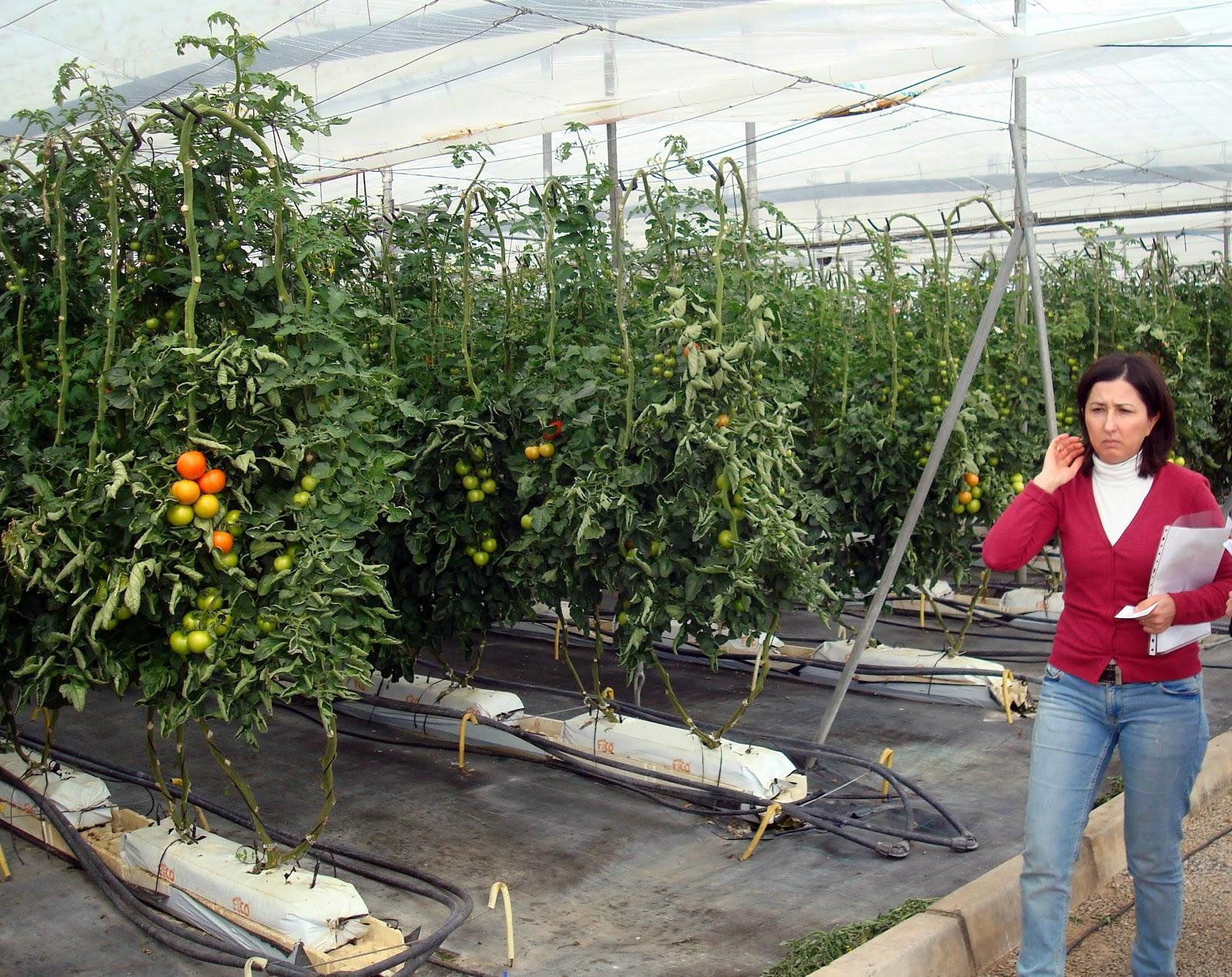 Thm tecnolog as de la horticultura mediterr nea for Vivero e invernadero