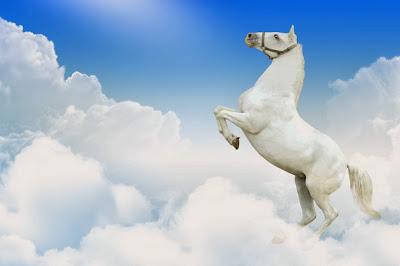 kuda putih berdiri hasil editan