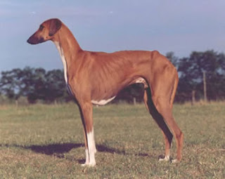 Most Rarest Dog Breeds In The World