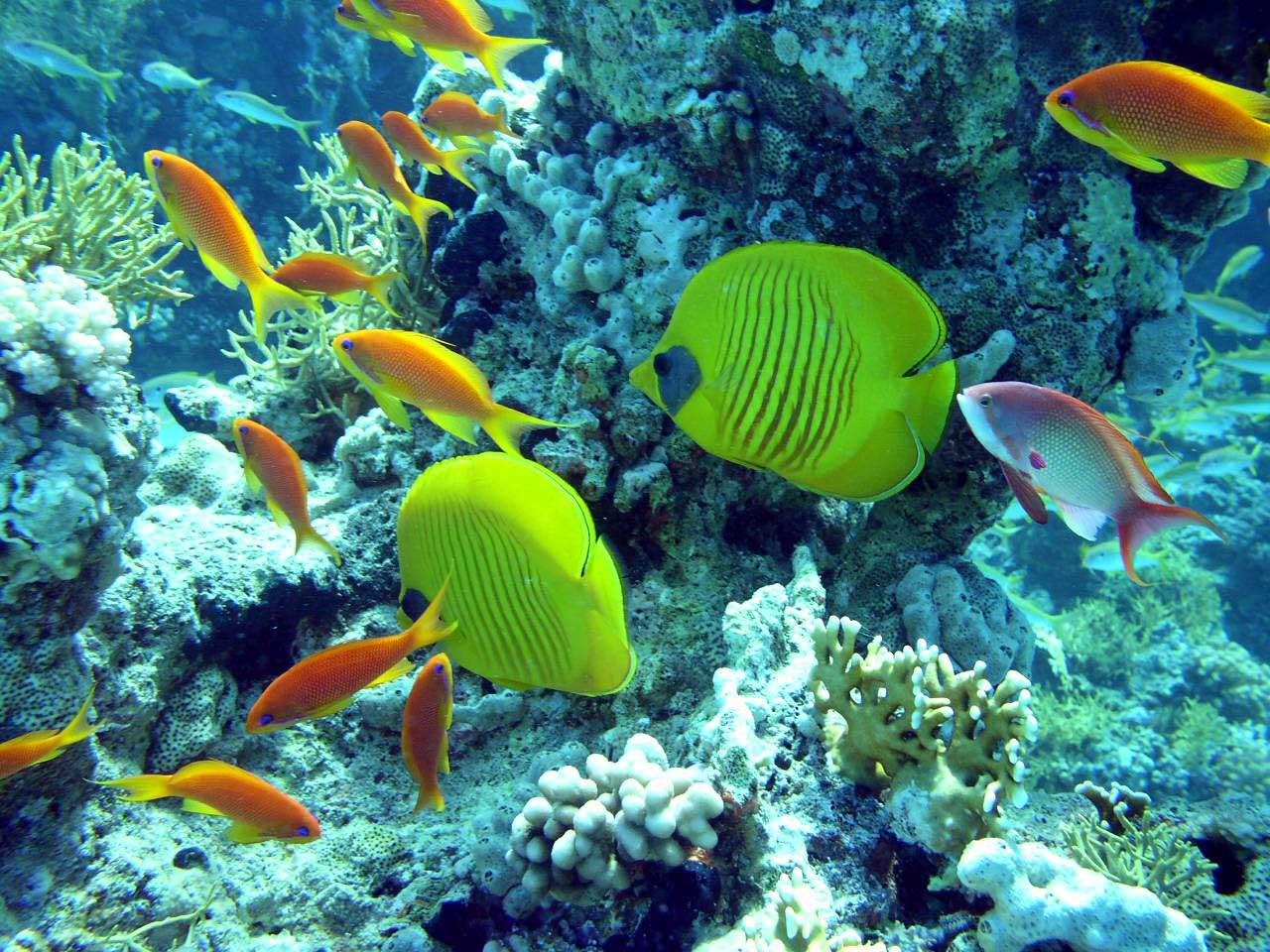 http://4.bp.blogspot.com/-oa0zEsRet_0/TZB2stE_RdI/AAAAAAAAACk/3_3xDMbn9oI/s1600/Sharm-El-Sheikh-Packages-sharm-el-sheikh-scuba-diving.jpg