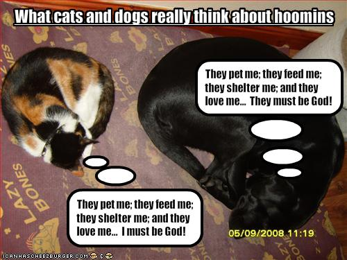 Funny Cats and Dogs with Captions