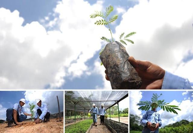 Melirik CSR Sebagai Solusi Masalah Lingkungan