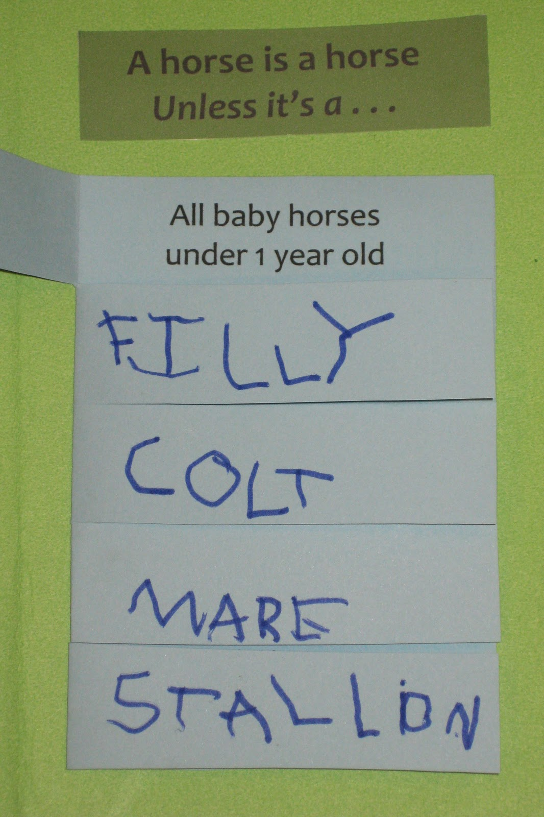 Homeschooling in Heels: All About Horses Lapbook