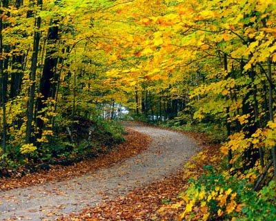 Free Autumn Wallpaper