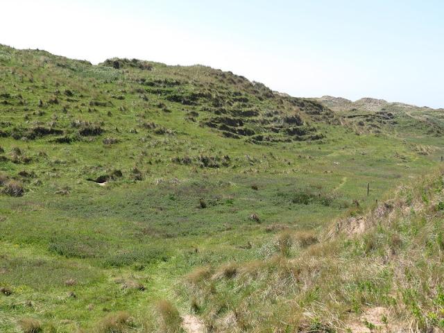 Sandscale Haws - Cumbria