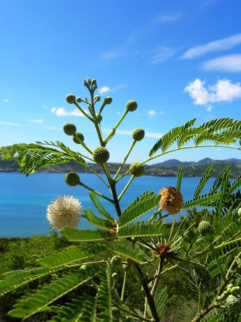 St. John's Antigua