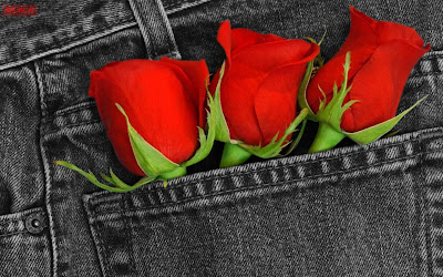 Red Rose Photos for Valentine's Day