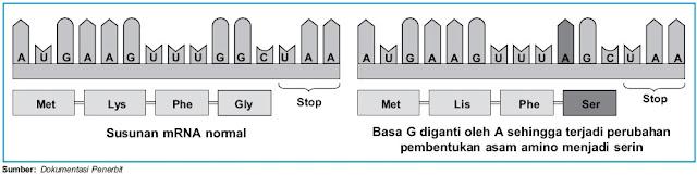 Perbedaan susunan mRNA normal dan mRNA yang mengalami missense mutation