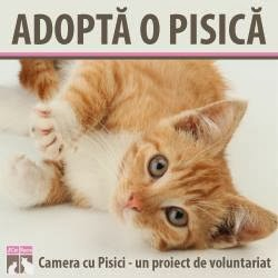 Adopta si tu o pisicuta!