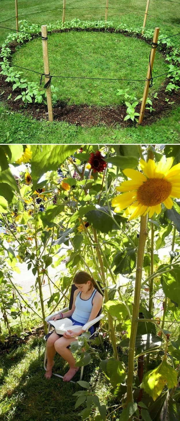 Pics Actually Grow A Sunflower House For The Kids To Play
