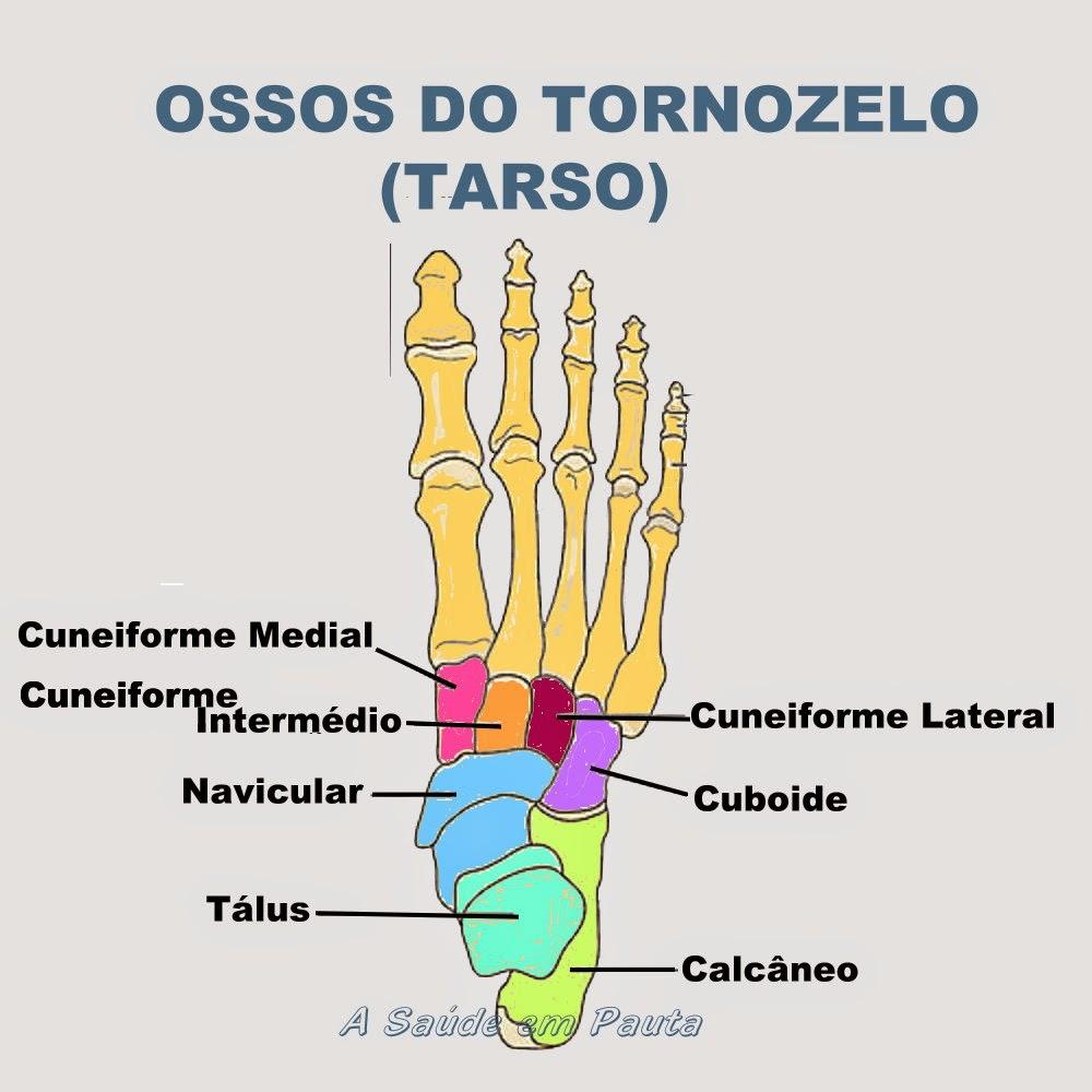 Nomes e localização dos ossos dos tornozelos dos pés (tarso)