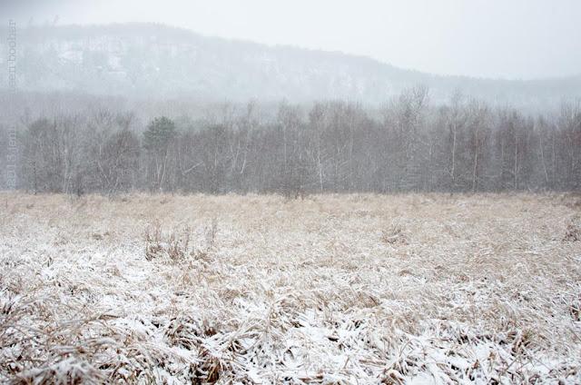 winter landscape, snow storm