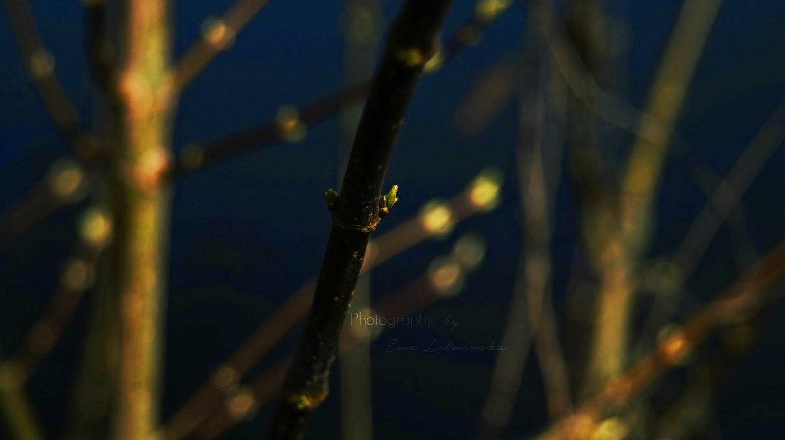 Wiosna - moje zdjęcia przyrody