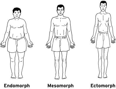 Understanding Somatotypes.