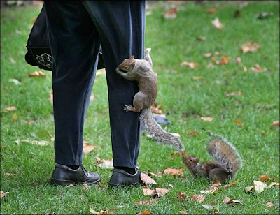 funny_picture_squirrel_on_leg_vandanasanju.blogspot.com