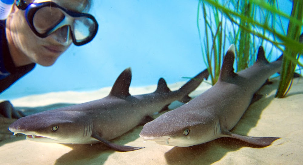 Baby Sharks As Pets