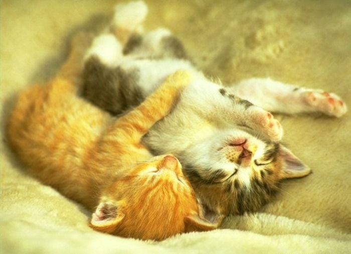 [Image: Happy-Hug-Day-21.jpg]
