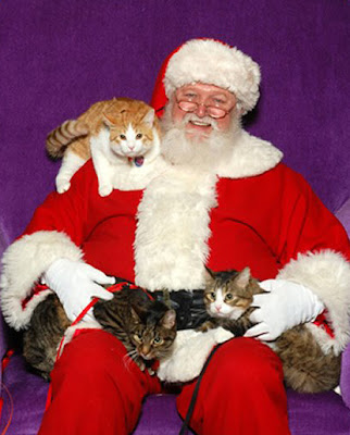 pere_noel_chat_008