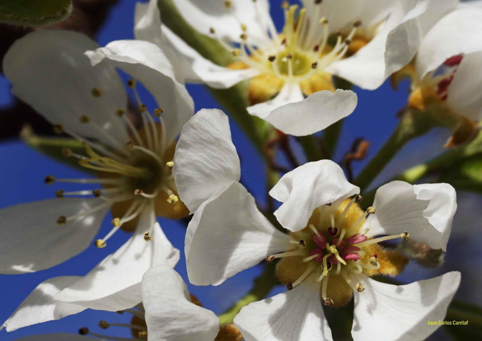 fotos de flor
