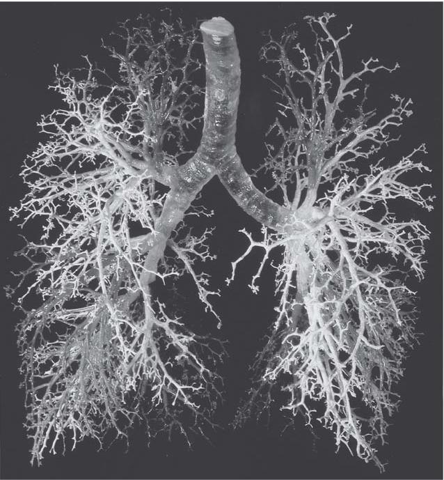 Le vene su una gamba si sono infiammate che fare