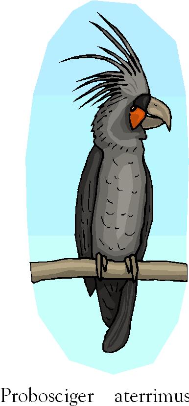 Palm Cockatoo | Probosciger Aterrimus Free Clipart