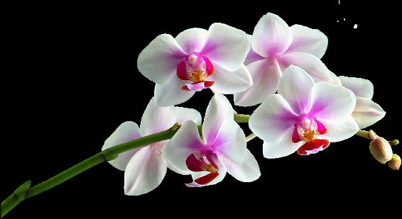 flor tropical dibujado a mano, modelo de fondo sin fisuras