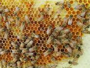 BEES WAX NATURAL SUPPLYER BALI