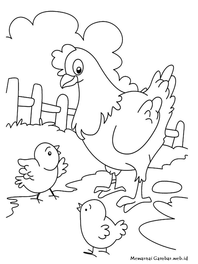 Gambar Mewarnai Induk Ayam Dan Anak-Anak nya