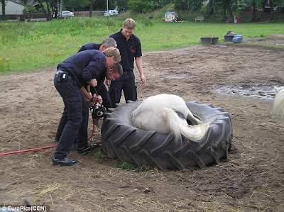 Kuda Tersepit Dalam Tayar Traktor