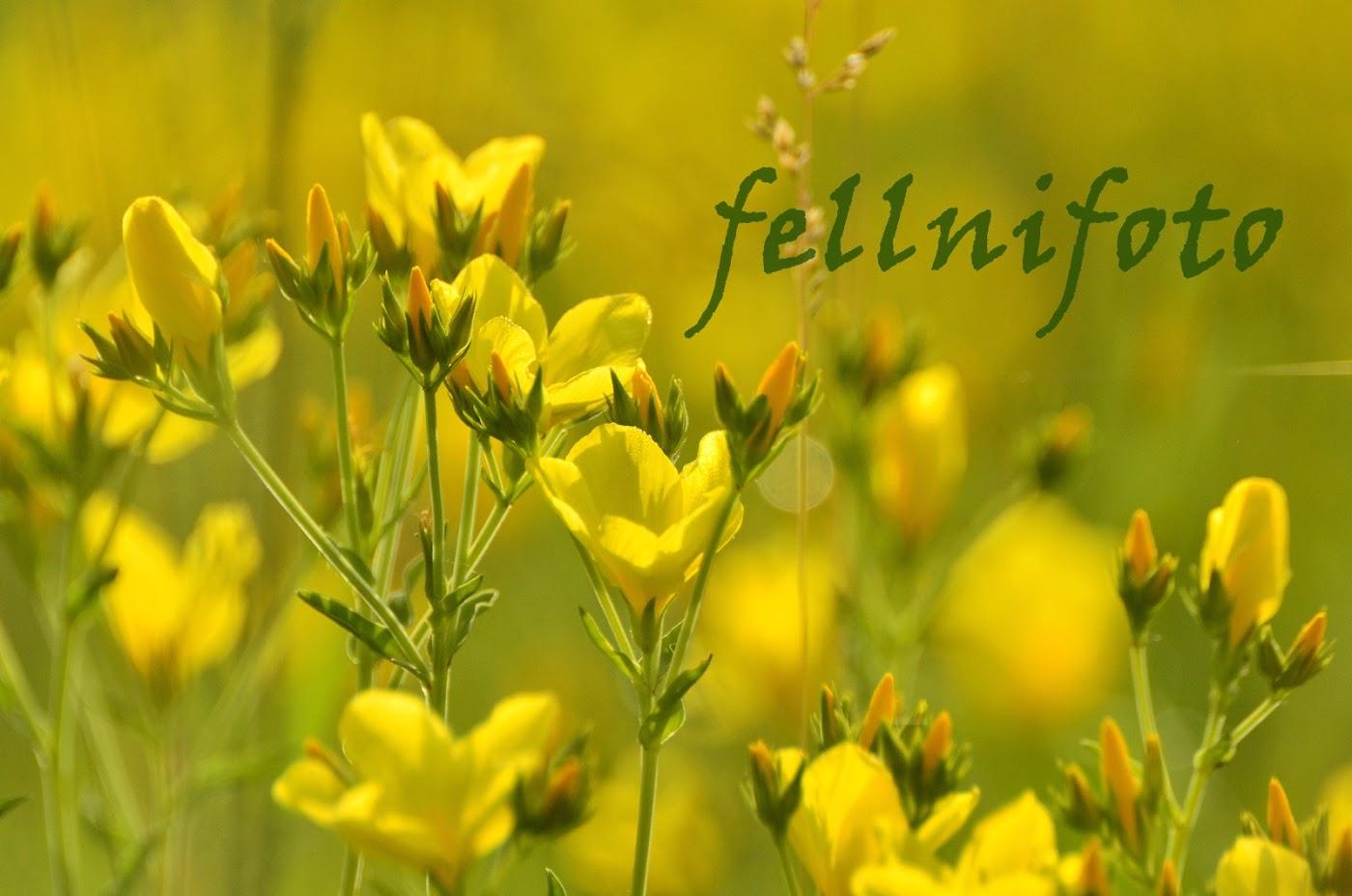 fellnifotó