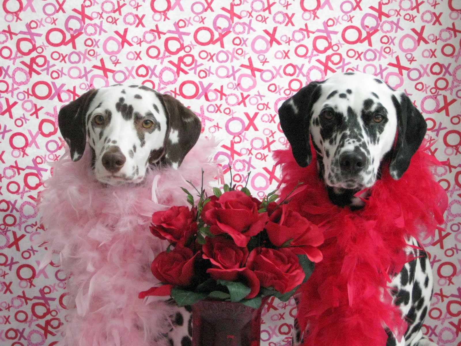 Valentines Day Gifts For Dog Lovers Australian Dog Lover