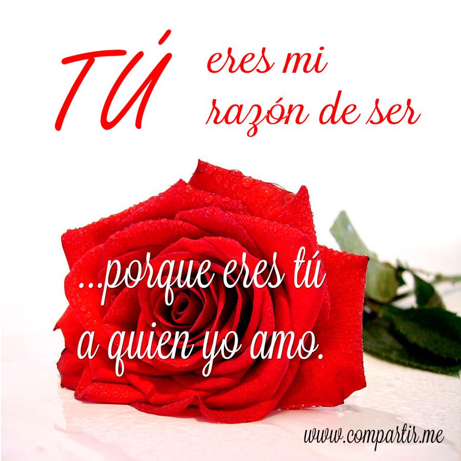 Imagenes de rosa rojas con frase de amor Imágenes  - Las Mejores Imagenes De Rosas