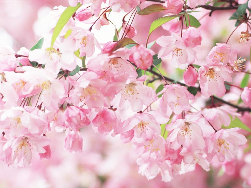 http://4.bp.blogspot.com/-odr6LUkRFYo/T2dTfXUJriI/AAAAAAAA-Xg/vxz0JZaLfpg/s1600/2-745119.jpg