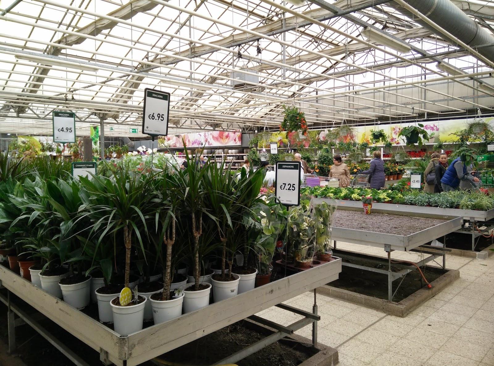 Chez homer en belgique pour deux plantes vertes mais for Plantes belgique