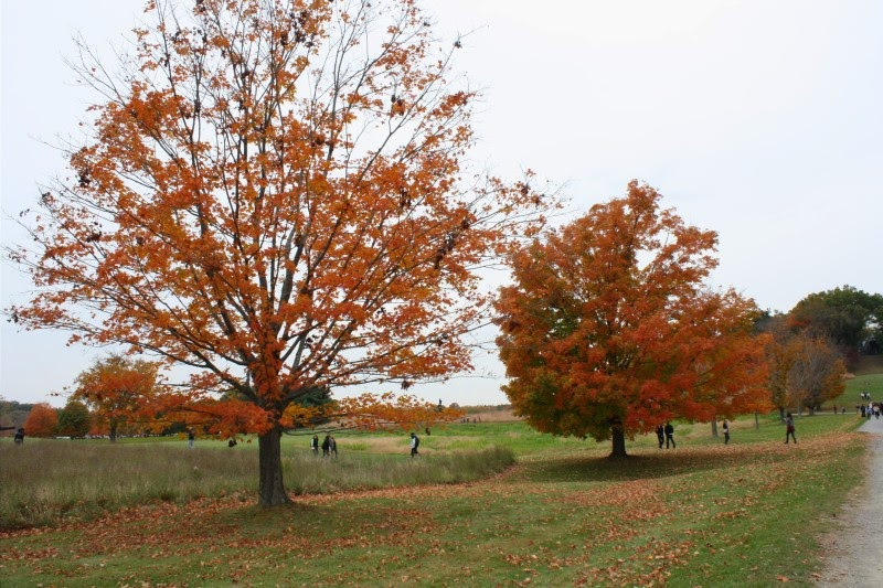 Storm King Art Center autumn New York playlist cozy fall leaves trees foliage upstate NY songs