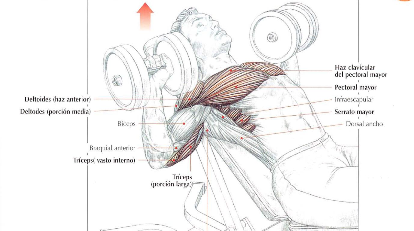 Как накачать грудные мышцы отжиманиями в домашних условиях 102