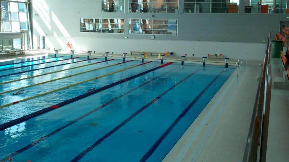 Cavalo selvagem record do guiness em coimbra for Metros piscina olimpica