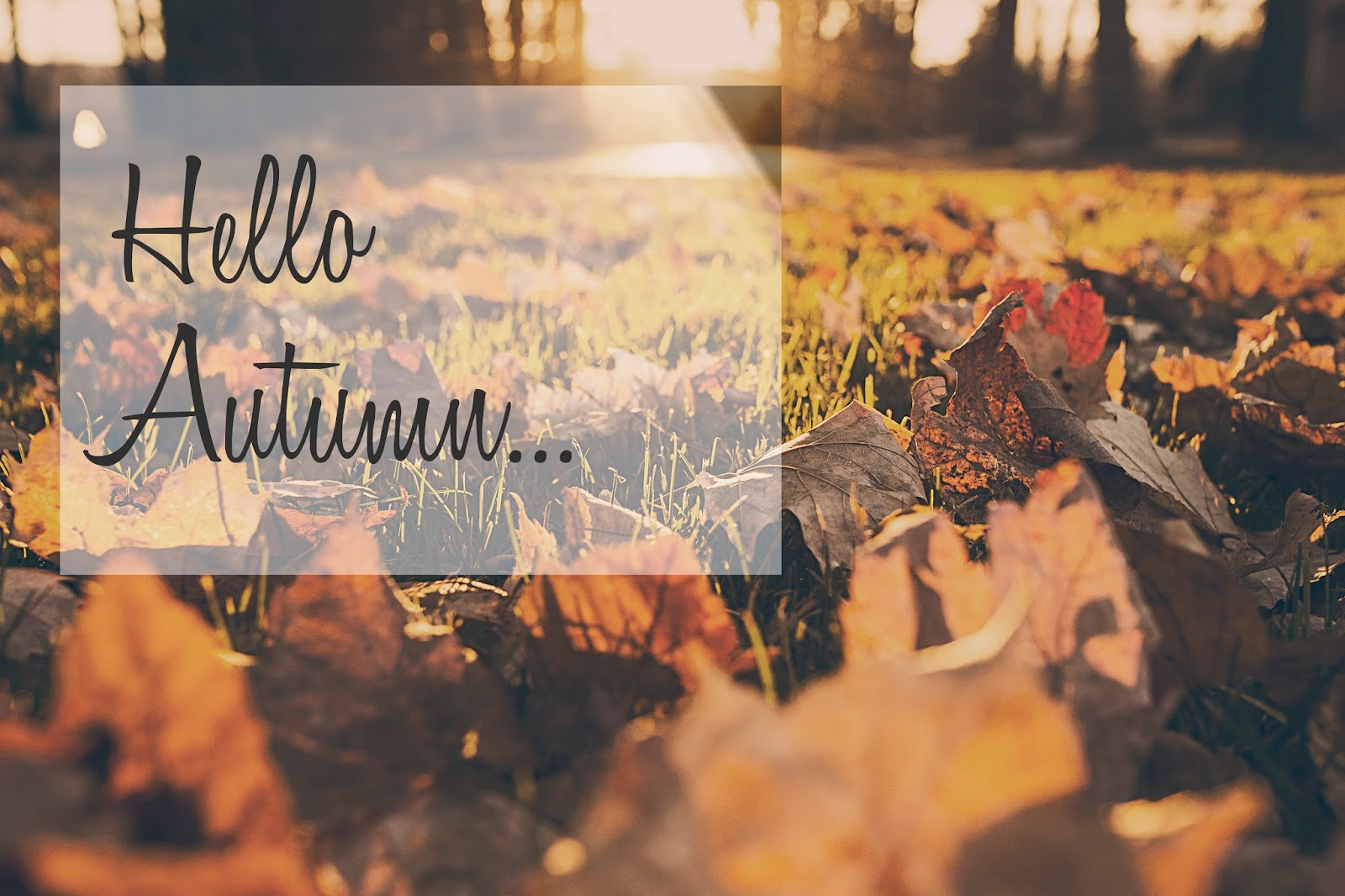 hello-autumn-leaves
