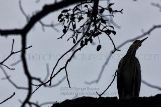 oiseau héron ombre chinoise et contre-jour