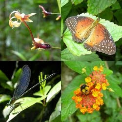 The Biodiversity of the Rainforest