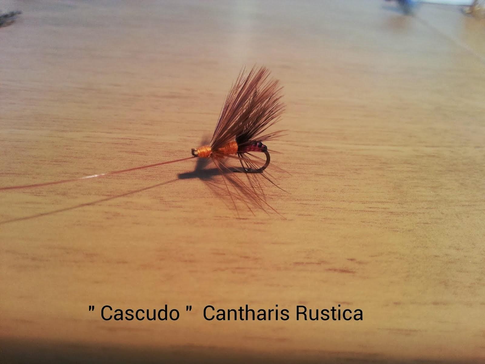 CASCUDO