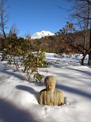 Mt Shasta Buddha