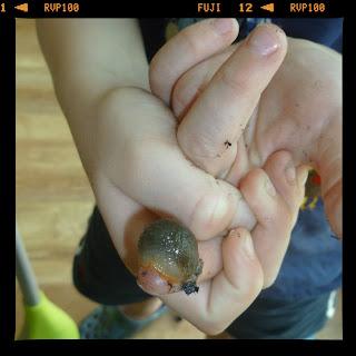 boy holding slug