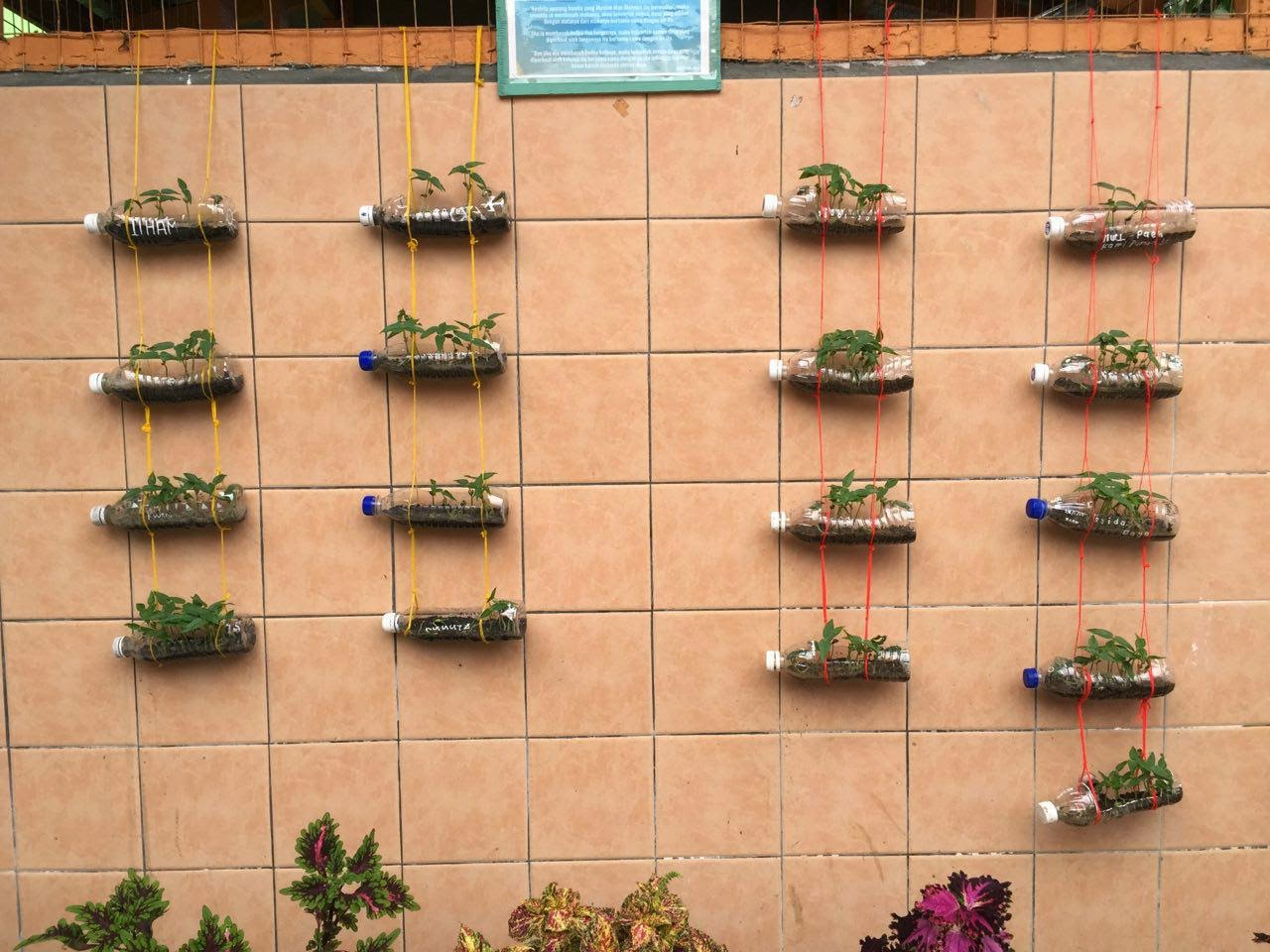 Idea P&P Sains : Tropisme (Beansprout Garden)