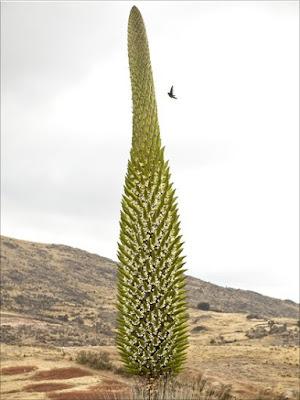 5 Tanaman Dengan Masa Tumbuh Paling Lama di Dunia