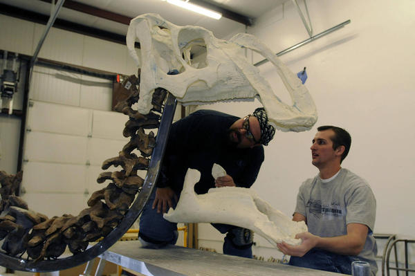 Experts reconstruct duck-billed dinosaur for new Natural History Museum of Utah