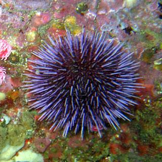 Echinodermata Sea Urchin | Animal Wi...