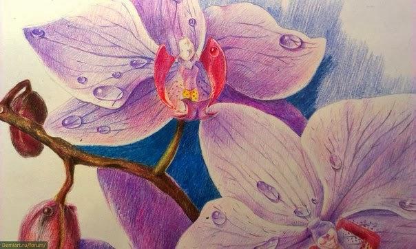 рисунки карандашами цветок
